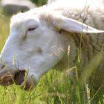 VertrauTier - Tiergestützte Ergotherapie und Intervention Willingen